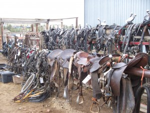 Harnesses and Saddles